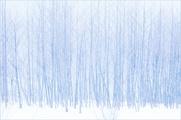 特別賞:冬木立
