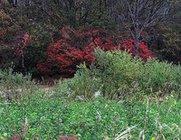 色がそまった森