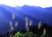 鳥甲山とススキ